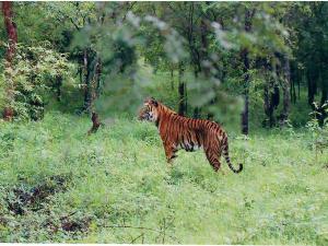 Route From Bangalore The Bhadra Wildlife Sanctuary Chikmagalur Hindi