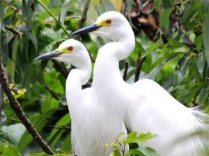 Wildlife Excursion Bandipur From Bangalore Hindi