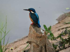 Travel Aid The Sur Sarovar Bird Sanctuary Hindi