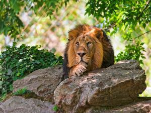 Spotting Wildlife Wildlife Sanctuaries India Hindi
