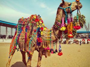 See Pictures Pushkar Mela 2017 Hindi