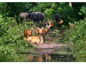 Most Visited Wildlife Sanctuaries India