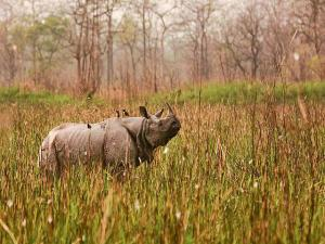 Places India Spot One Horned Rhinos Hindi