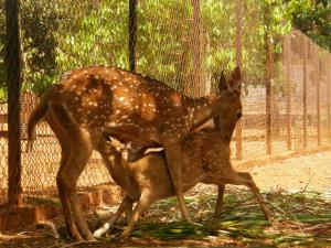 Best Five Wildlife Sanctuaries Goa Hindi