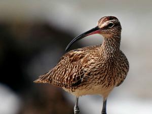 Top 10 Bird Sanctuaries Kerala Hindi
