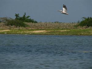 Enjoy The Pristine Lake Birdlife At Pulicat