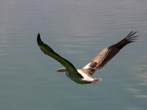 Vedanthangal Bird Sanctuary Perfect Weekend Getaway From Chennai Hindi