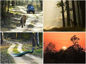 Kanha National Park Safari Mp