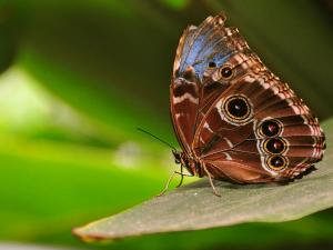 Kanpur Gets Its First Butterfly Park Hindi