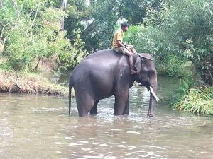 Elephant Camps South India