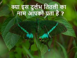 Uttarakhand State Symbols Common Peacock State Butterfly Hindi