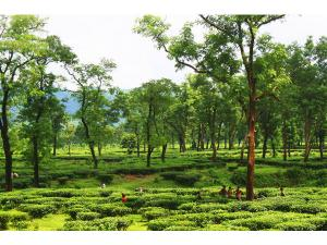 Dibrugarh Travel Guide Best Places See Hindi