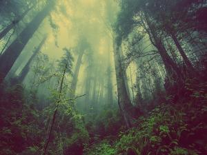 Places To Visit In Williamnagar Meghalaya Hindi