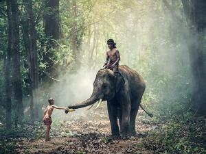 Wildlife Adventure In Betla National Park Palamu Jharkhand