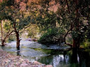 Visit Sita Mata Wildlife Sanctuary In Rajasthan After Monsoon