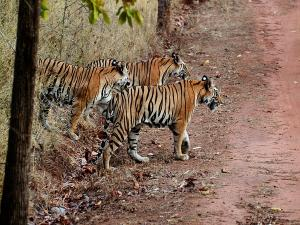 Madhav National Park Travel Guide Timings How Reach