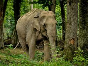 Top Wildlife Sanctuaries And National Parks Of Tamilnadu