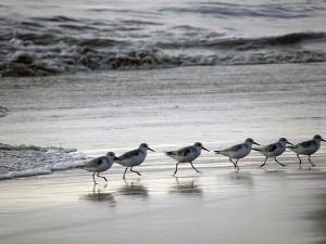 Kerala God S Own Beach Country