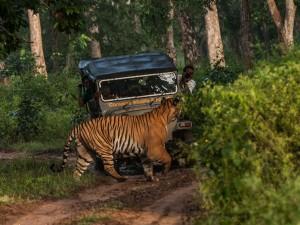 Most Popular Wildlife Sanctuaries In Karnataka 000404 Pg