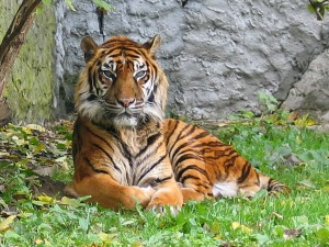 Famous Tiger Reserves In North East India Hindi