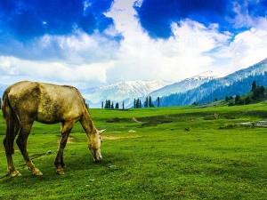 A Beautiful Trip To The Heaven Of Earth Gulmarg Hindi