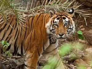 Sariska Tiger Reserve Alwar Rajasthan Hindi