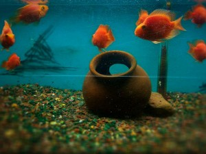 Most Famous Aquariums In India Hindi