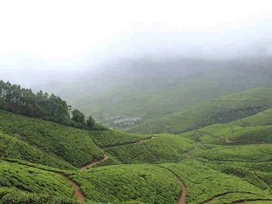 Kolukkumalai Worlds Highest Tea Plantation