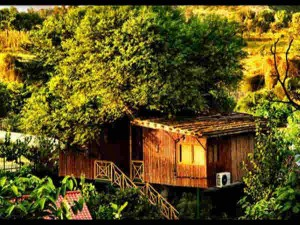 Best Tree House Resorts The Lap Natural India