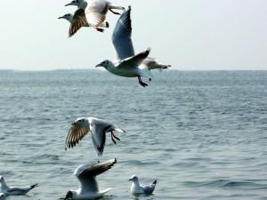 Nal Sarovar For Bird Lovers Hindi