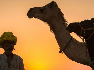 Interesting Facts About Pushkar Camel Fair Hindi