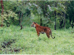 Route From Bangalore The Bhadra Wildlife Sanctuary Chikmagalur Hindi