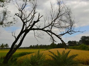 Driving From Bangalore The Land Maddur Vade Hindi