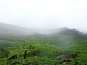 Hours Munnar Here S Complete Guide On What See Do Hindi