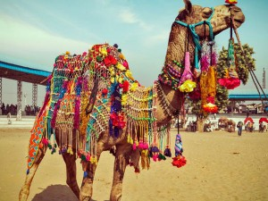 See Pictures Pushkar Mela 2017 Hindi