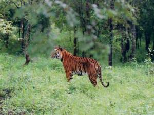 Best Tips Wildlife Travel Hindi