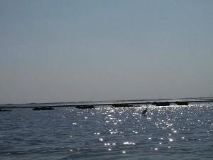 Travel The 6 Alluring Lakes Gujarat Hindi