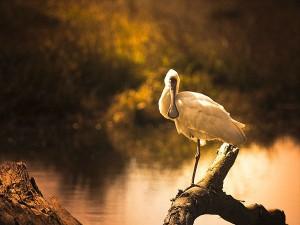 Top 5 Beautiful Bird Sanctuaries Maharashtra Hindi