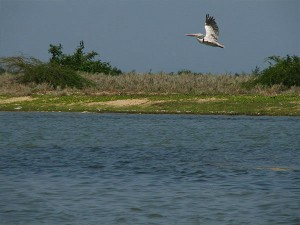 Enjoy The Pristine Lake Birdlife At Pulicat