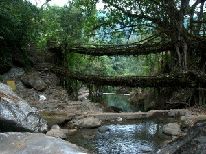 Meghalaya Is The Adventure Destination You Have Explore Hindi