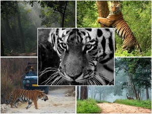 Top Tiger Reserves In India Bengal Tiger