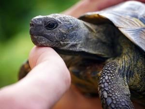 Olive Ridley Turtles On Versova Beach After 20 Years Mumbai Hindi