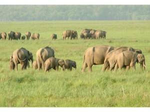 Top 4 Wildlife Destinations Near Delhi Hindi