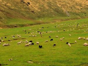 Unexplored Untouched Places Himachal Pradesh Hindi