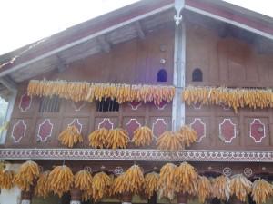 The Charming Corn Village Bhatoli Sainji Mussoorie Uttarakhand Hindi