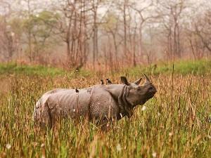 Travel The 7 National Parks Assam Hindi