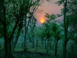 Places To Visit Near Mudumalai National Park Hindi