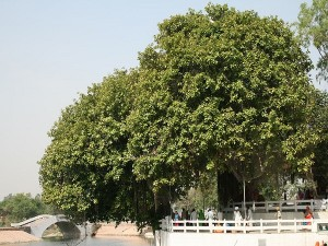 Places To Visit In Kurukshetra Haryana Hindi