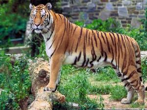 Visit To Kalakad Mundanthurai Tiger Reserve Tamil Nadu Hindi