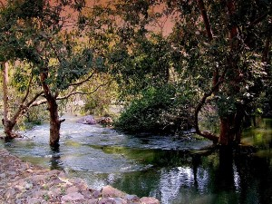 Visit Sita Mata Wildlife Sanctuary In Rajasthan After Monsoon